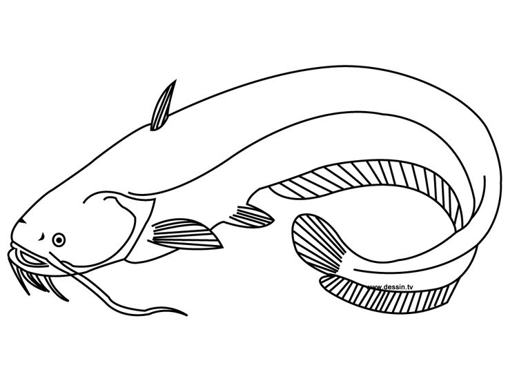 Catfish Coloring Page Miakenasnet