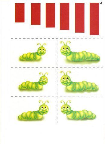 Thema rupsen en vlinders : rupsen meten