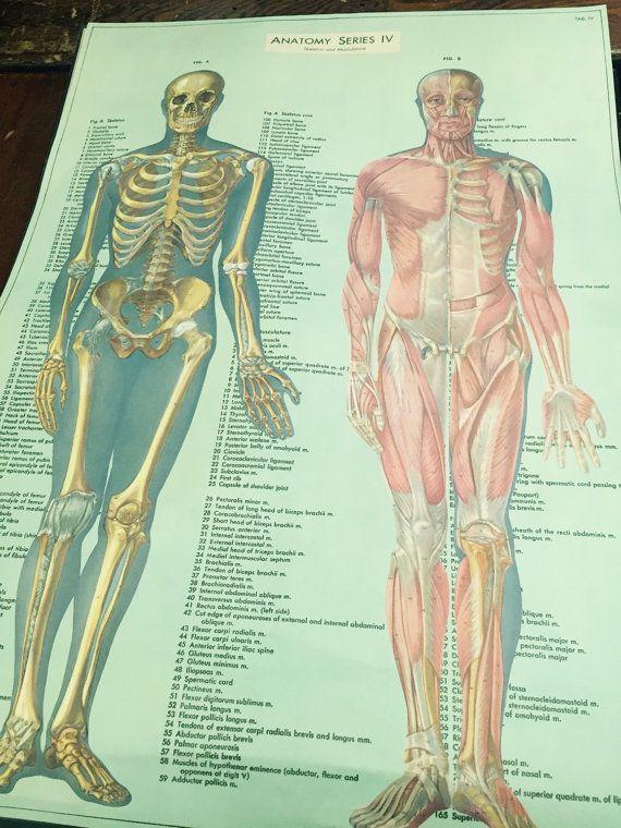 Vintage inspired medical chart medical oddity skeletal system