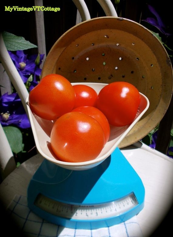 These English vintage Salter scales are so sturdy - now we just need some mozzarella to go with those tomatoes... $38