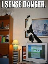 Crazy Cats!: Funny Cat Photo, Funny Cat Pictures, Cat Humor, Animal Humor, Funny Pictures, Motivation Quotes, Computers Humor, Crazy Cat, Stranger Danger