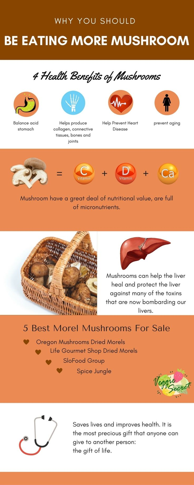 THE BEST 5 MOREL MUSHROOMS FOR SALE IN 2017
