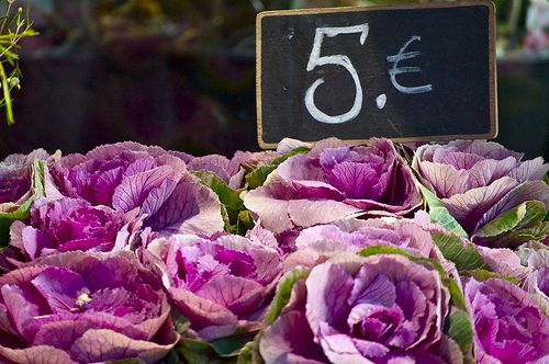 Flowers in the markets in France. How gorgeous are these?: French Flowers, Farmers Market, Purple Flowers, Purple Cabbage, Purple Passion, Color Purple, Color Idea