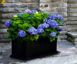 27 best Hydrangea images on Pinterest | Hydrangeas, Flowers garden ...