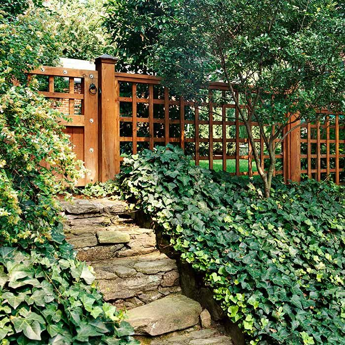 Ivy As A Ground Cover For Slopes Even Better Would Be