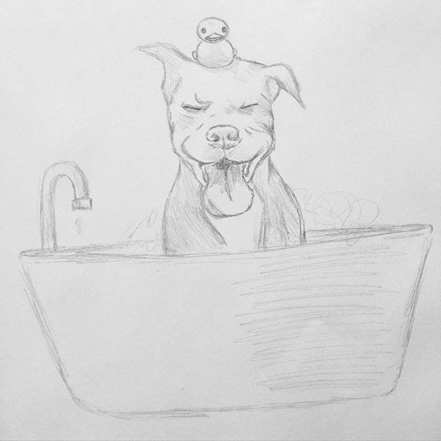 Best 25 Pitbull Drawing Ideas On Pinterest Pit Bull Art