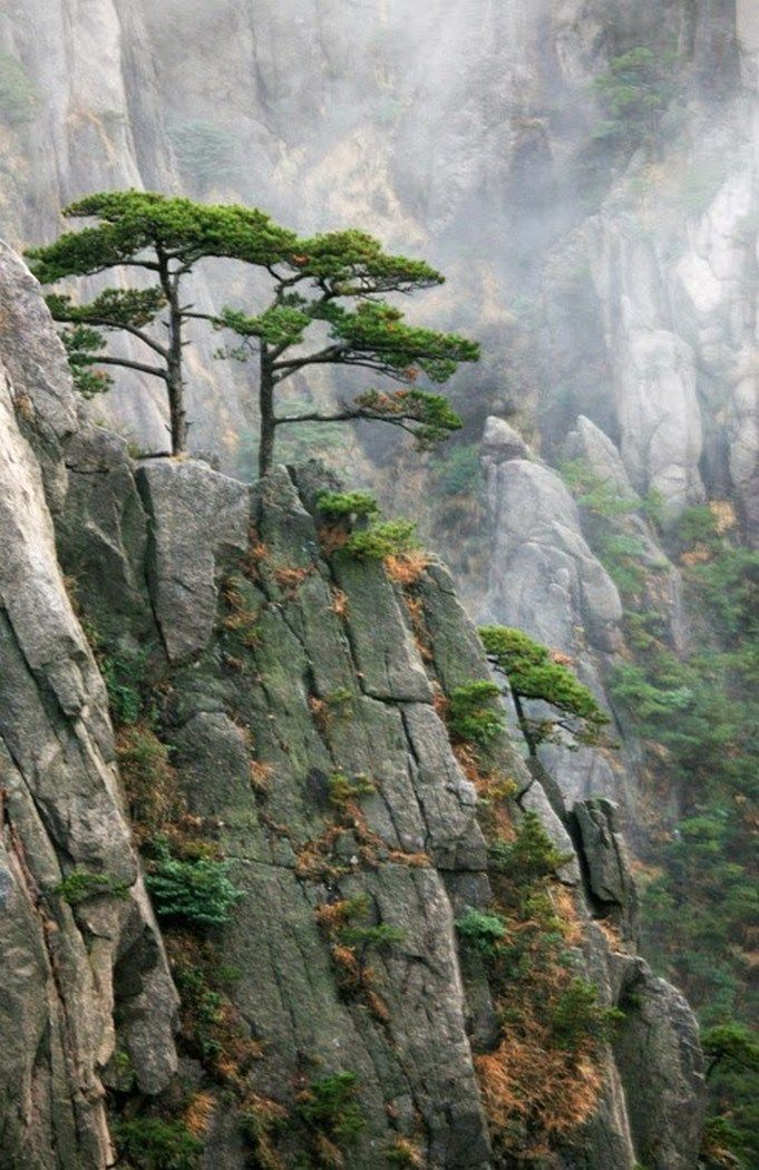 I find this amazing, a tree growing out of rock!