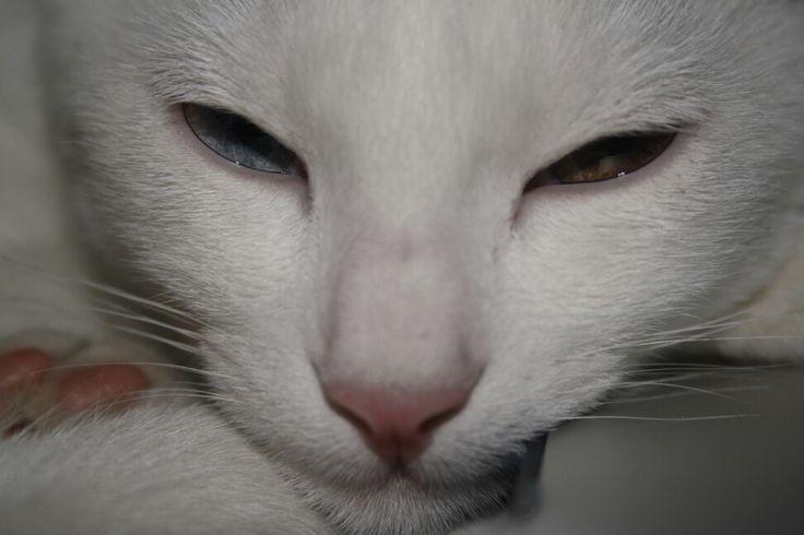 Photography Eyes Cat