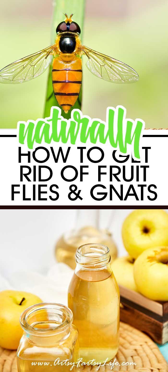 How To Get Rid Of Fruit Flies Naturally Fruit Flies Fruit Diy Essential Oils