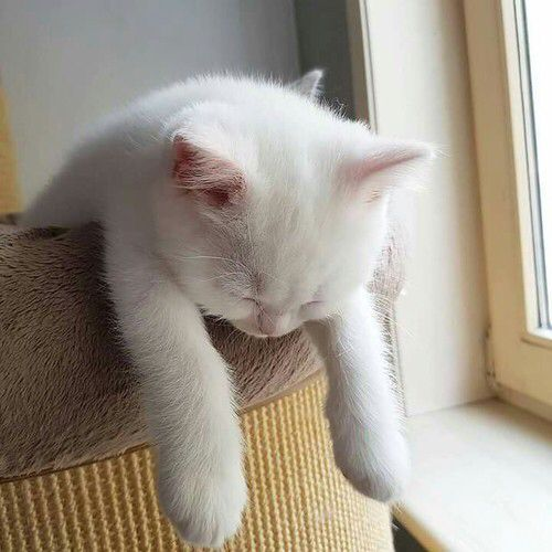 That feeling after your Bossa meal #NapNeeded