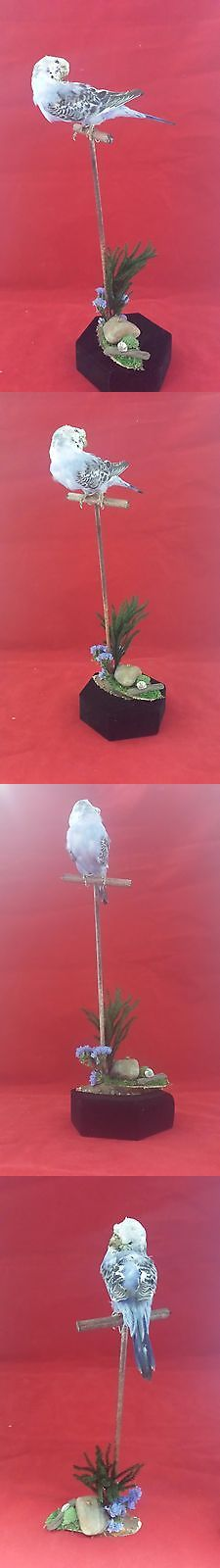 Birds 71123: Sale *Purple Parakeet Budgerigar On A Perch Display Bird-Nature Lovebird Pigeon -> BUY IT NOW ONLY: $79.99 on eBay!