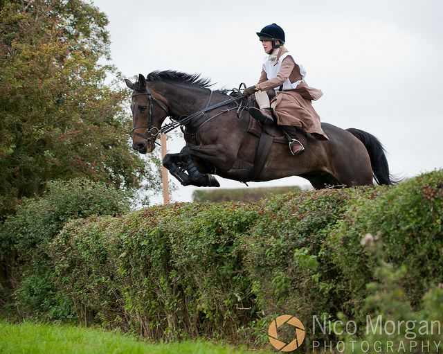 : Sidesaddle Someday, Hunters Trials, Association Hunters, Hedges Side, Saddles Elegant, Sidesaddl Riding, Sidesaddle Loveliness, Big Hedges, Side Saddles