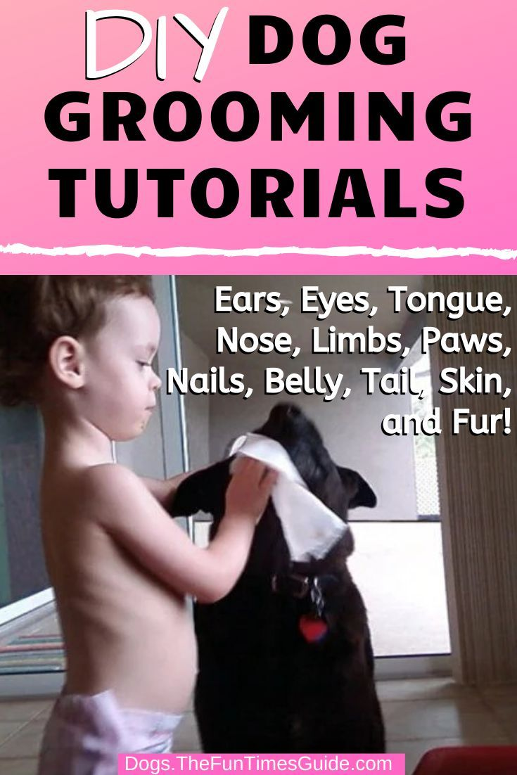 Diy dog grooming tutorials tips for dealing with