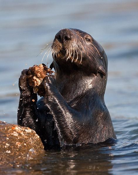 otter rock chatrooms Otter rock 2018 (avec photos): top 20 des logements à otter .