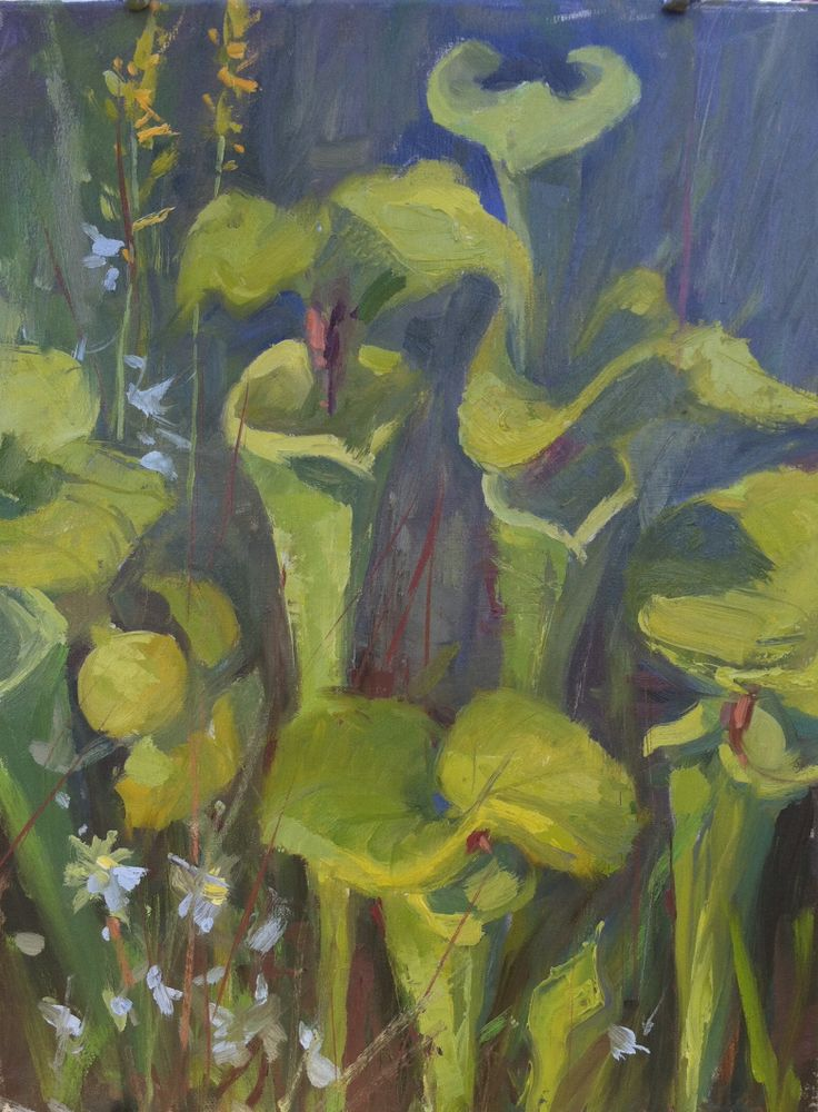 """Pitcher Perfect"" 16"" x 12"" Private Collection, Rare and Unusual pitcher plants, painted in Tate's Hell just outside Sumatra in Florida's Forgotten Coast"