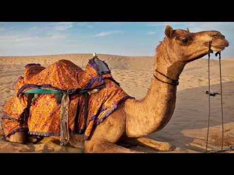 కొన్ని మీకు తెలియని నిజాలు | Telugu Facts 3rd Video