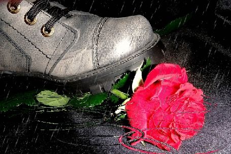 Boots coming on the rose, lying in a puddle on the surface of which circles from the raindrops
