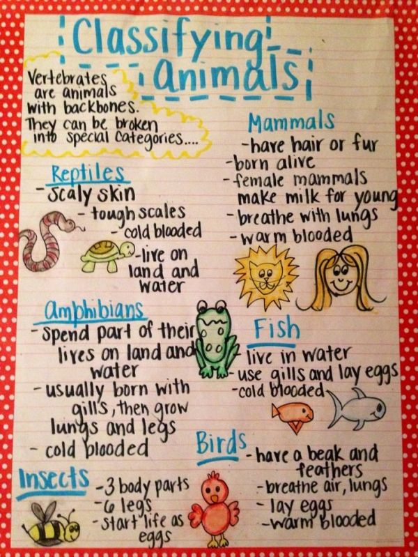 The animal classification anchor chart I made for my first grade by fannie