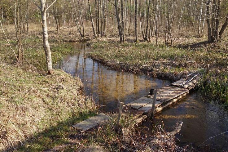 весенний лес и пар в долине - Поиск в Google