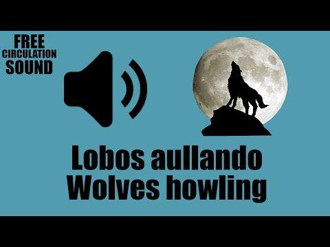 Download Youtube: Perro aullando como lobo