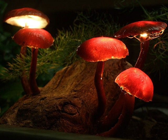 Turn your room into a magical forest by illuminating it with these psychedelic DIY mushroom lamps. You'll be able to design your very own groovy shrooms and place them anywhere you want a little ambient lighting that won't overpower the room. Far out!