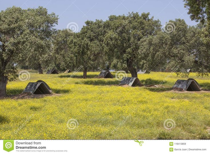 Sow huts on dehesa for black iberian pigs. Extremadura, Spain