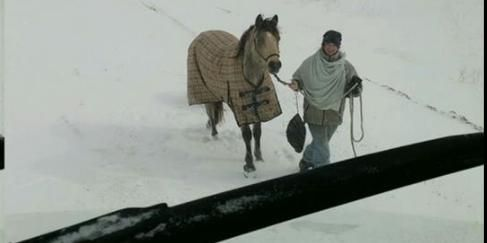 A truck driver found himself stranded on a highway in Winnipeg during a snow storm this week. A tough and potentially dangerous ordeal for anyone to experience. But fortunately a superhero came to his rescue. A courageous woman on horseback braved the storms and helped him out. 18-year-old Eileen Eagle Bears saw PeterDouglas on the highway camera, which he fortunately broke down right in front of. The poor driver ended up being stuck in freezing conditions over night.