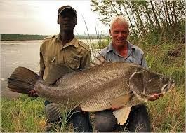 Image result for Kenya Nile Perch Fish Leather.