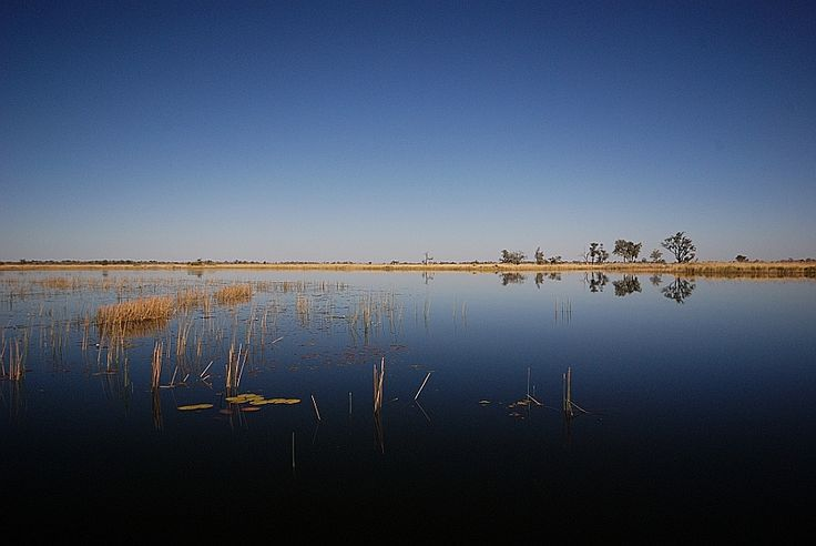 The Okavango delta, formed by the Okavango River which rises in Angola and ends here, in Botswana's Kalahari desert, in one of the world's largest inland deltas.
