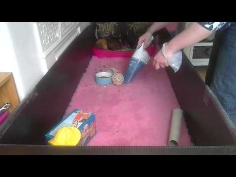 Daily cleaning routine for a C&C guinea pig cage using vet ...