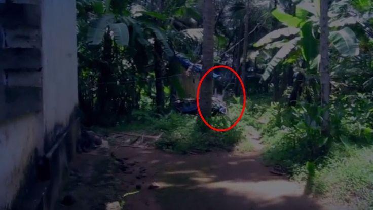 1000 ideias sobre ghost sightings no pinterest imagens