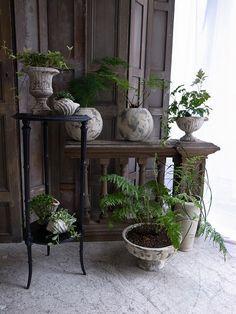 植物の鉢植えがたくさん入荷しました。 price:¥2,100~