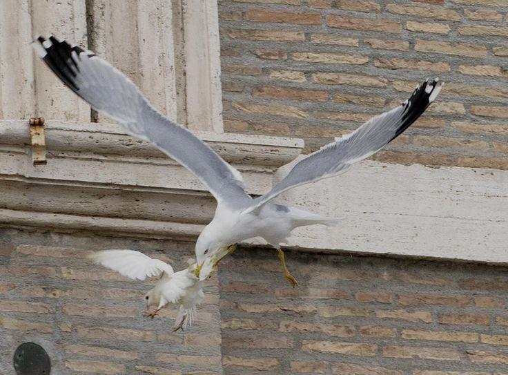 doves 6.jpg (960×709)