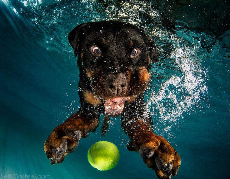 Underwater #Dog cross-eyed