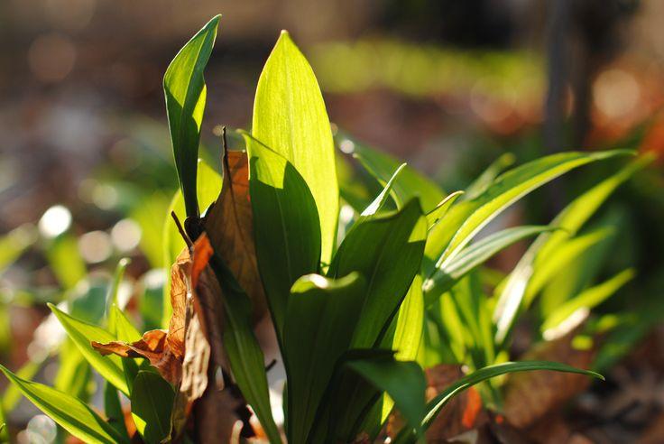 Skobrák András Napfürdőzés márciusban Ismét egy ismert, kora tavasszal nyíló növényre esett a választásom. Több kép Andrástól: https://www.flickr.com/photos/106287128@N03/