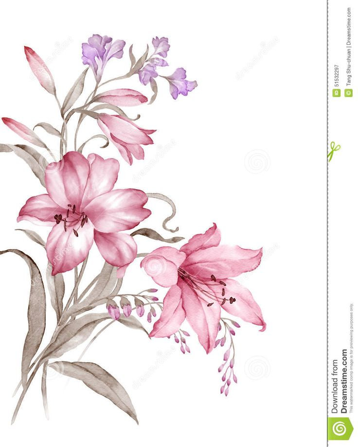 watercolor-illustration-flower-set-simple-white-background-51532297.jpg (1043×1300)