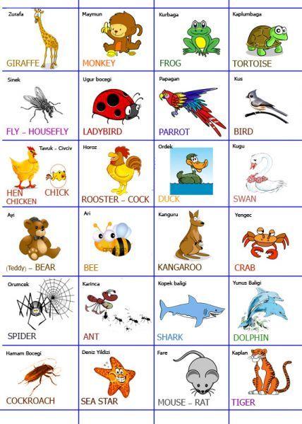 ingilizce hayvanlar ve türkçe anlamları