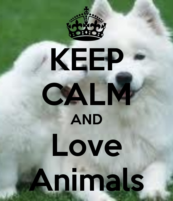 Love Animal Quotes: 4686 Best Images About Keep Calm Quotes On Pinterest