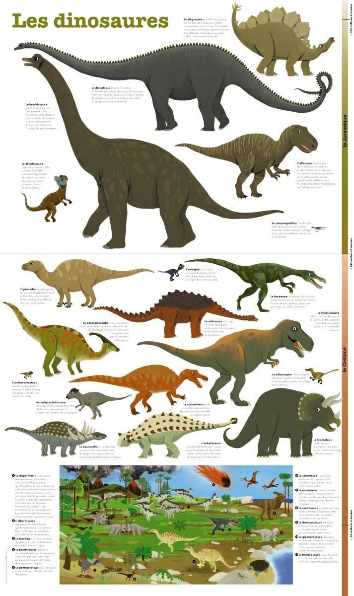 Le brachiosaure le diplodocus le tyrannosaure l iguanodon l oviraptor