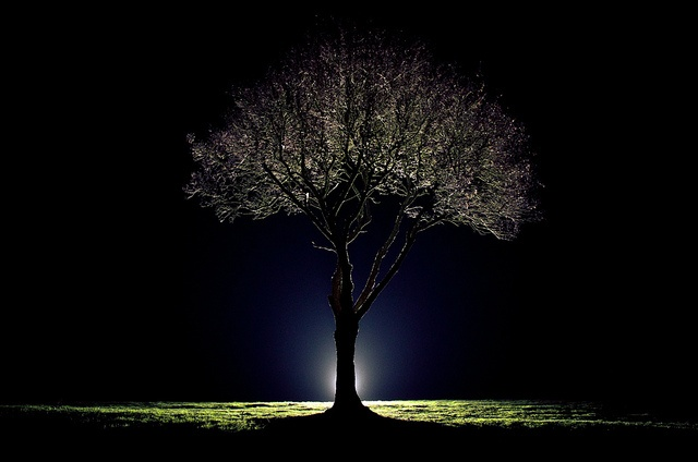 Backlit tree. Awesome.: Posts, Fave Photos