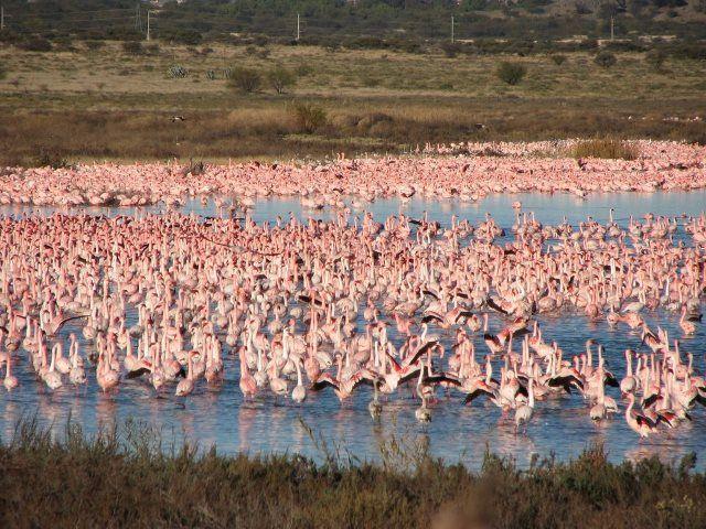 Flamingo Casino Kimberley