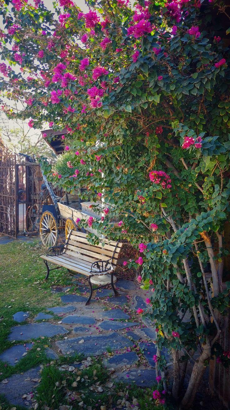 Yuma Arizona From the Farm antiques flowers bench grass stone walkway