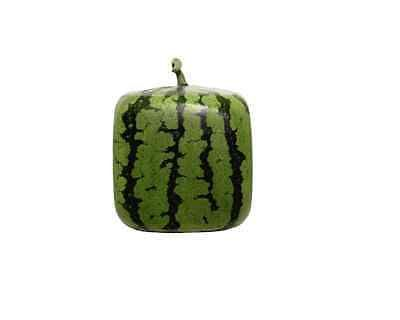 Square Shaped Watermelon Mold For Growing Square Shaped Fruit