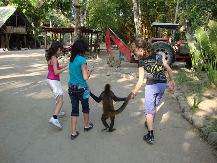 Out for a walk with a Spider Monkey. This is in Curu wildlife reserve park near Playa Tambor.