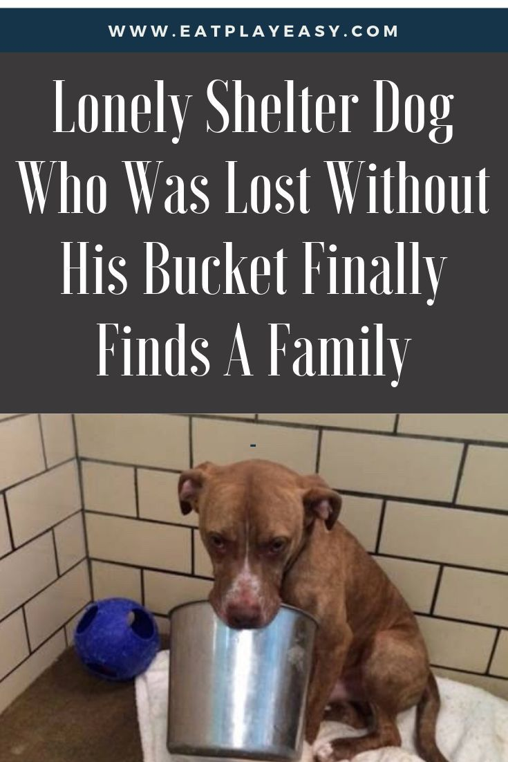 Lonely shelter dog who was lost without his bucket finally