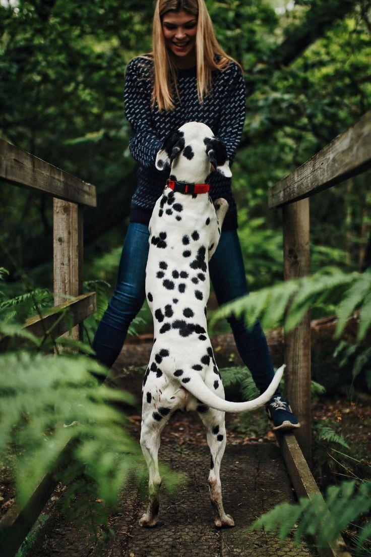 101 Best Ongles Images On Pinterest: 17 Best Ideas About 101 Dalmatians On Pinterest