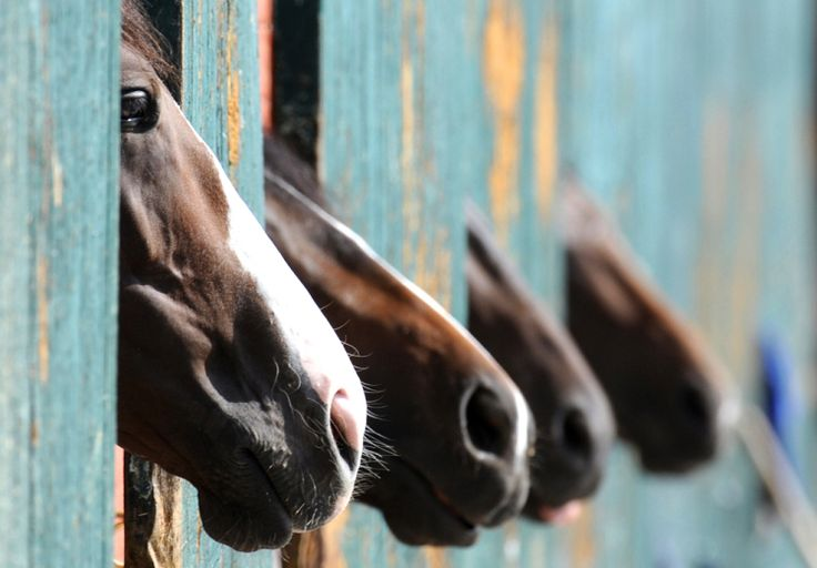 Horse noses: Words Of Wisdom, Life, Equine, Horses, Off Nose, Hors Pictures, Children, Beautiful Creatures, Animal