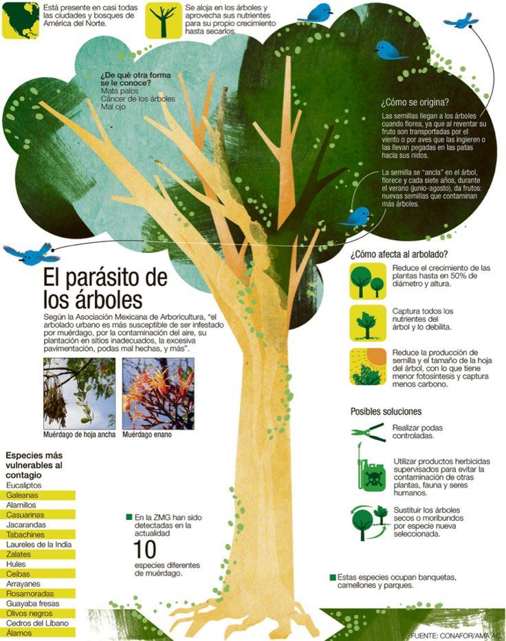 El parásito de los arboles