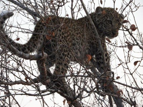 Look who found climbing the trees at our wildlife conservation project in Limpopo! #southafrica