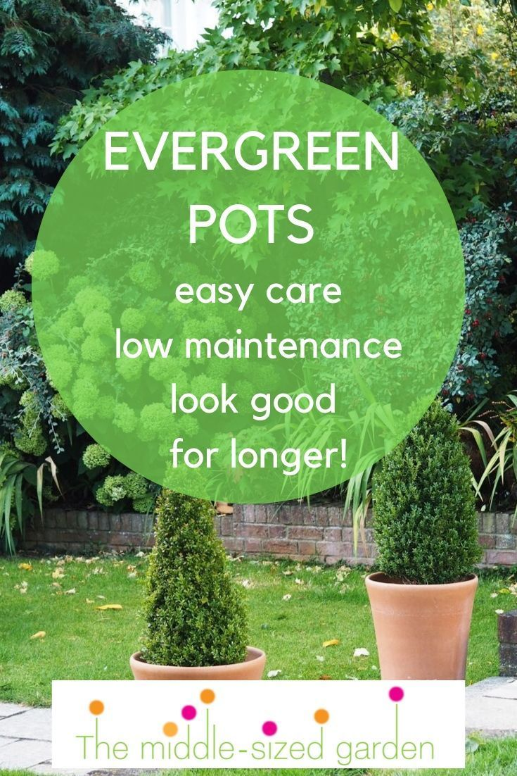 10 Easy Care Evergreen Pots For Year Round Impact The Middle Sized Garden Easy Garden Ideas Landscaping Container Gardening Diy Container Gardening